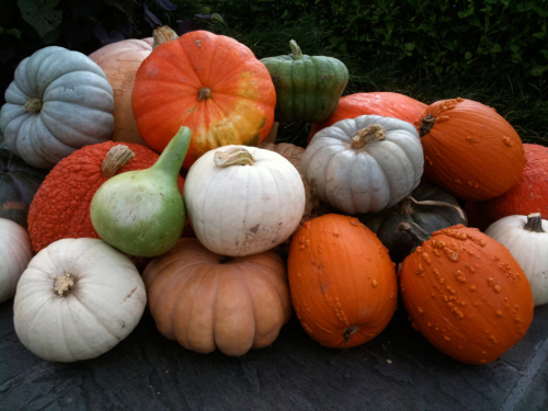 Pile-of-pumpkins-horiz-web